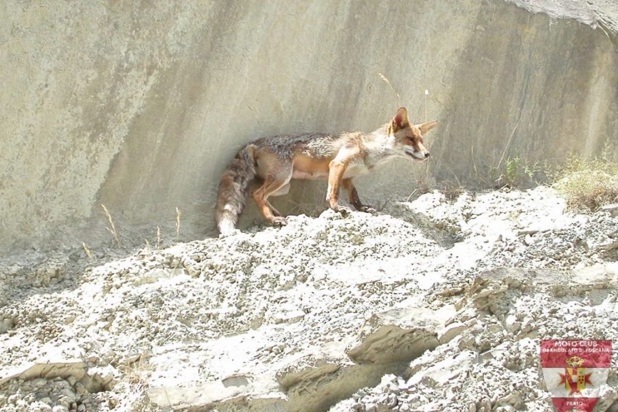 Foto Diga di Ridragoli 2005